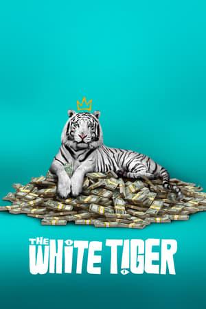 თეთრი ვეფხვი / The White Tiger