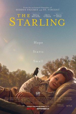 შოშია / The Starling