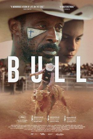 ხარი / Bull